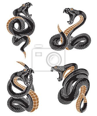 Viper Set Hada Rucne Kreslene Ilustrace V Gravirovani Inkoustove