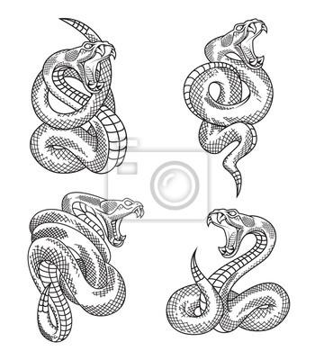 Viper Set Hada Rucne Kreslene Ilustrace V Gravirovani Izolovanych