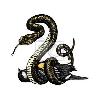 Viperovy Had Hadi Kobra A Python Anakonda Nebo Viper Kralovska