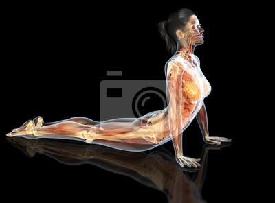 Fototapeta Vnitřní orgány ženy s klouby, kostry a svaly, 3d lékařsky ilustrace na černém vzdělání a zkušeností