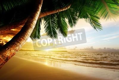 Fototapeta Východ slunce na karibské pláži