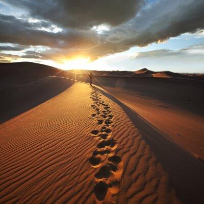 Fototapeta Výlet v poušti