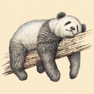 Fototapeta vyrýt izolované Panda ilustrační skicu. lineární art