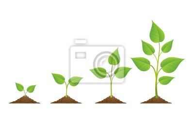 Fototapeta Výsadba. Rostliny roste izolované na bílém pozadí nebo rostlinné semeno, pěstování a kultivace vektorové ilustrace