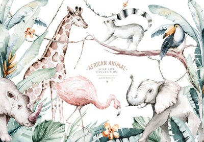 Fototapeta Watercolor illustration of African Animals: lemur, flamingo and giraffe, toucan and rhipo, rhino and elephant isolated white background. Safari savannah animals