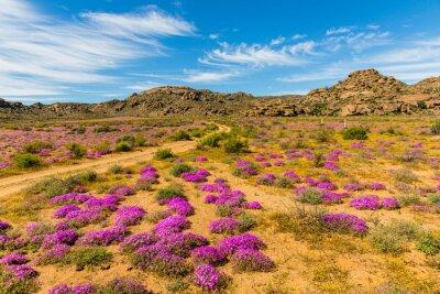 Fototapeta Wildblumen v Südafrika