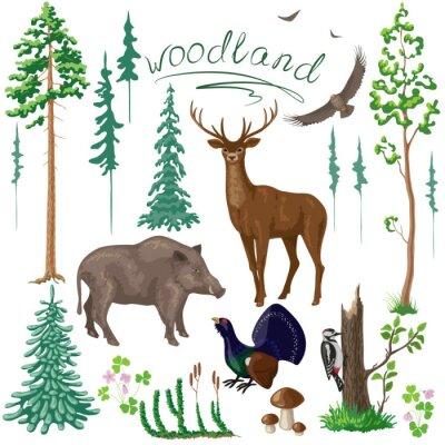 Fototapeta Woodland Rostliny a zvířata sada