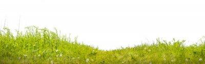 Fototapeta земля с зеленой травой на белом фоне