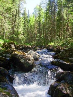 Fototapeta Horská řeka v jehličnatého lesa, Горная река в хвойном лесу