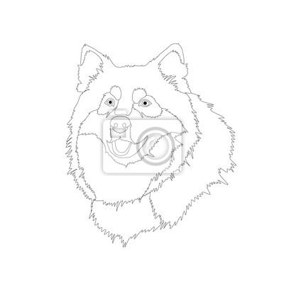 Husky Dog Head Tvar Realisticky Vektorove Ilustrace Zbarveni