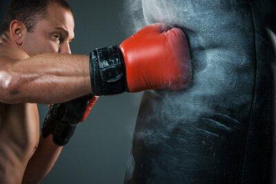 Fototapeta Young Boxer box