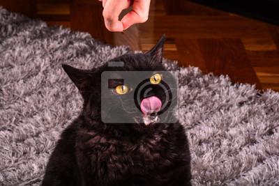 staré černé kočičí rty