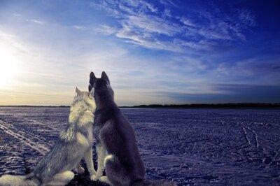 Fototapeta zamilované - dva psi setkat při západu slunce