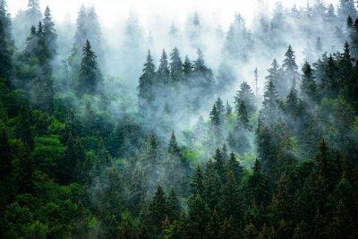 Fototapeta Zamlžené horské krajiny