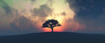 Fototapeta západ slunce a strom