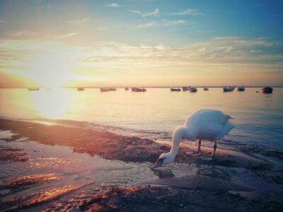 Fototapeta Západ slunce na Baltském moři