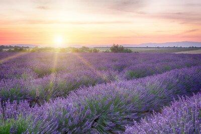 Fototapeta Západ slunce v Provence