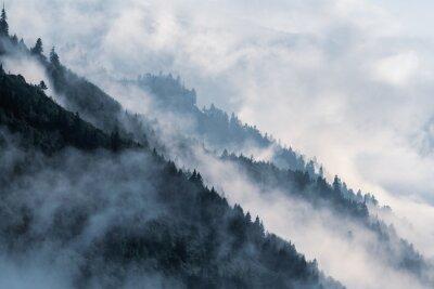 Fototapeta Zasněžená horská svažitost v nízko položené údolní mlze se siluety stálezelených jehličnanů zahalených v mlze.