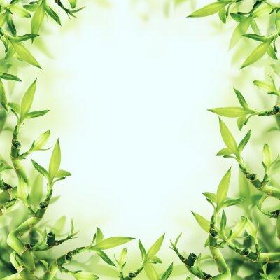 Fototapeta Zelená Bamboo pozadí. Spa a zdravé