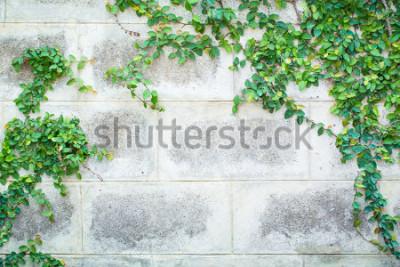 Fototapeta Zelená louka rostlin na bílé zdi Krásné pozadí