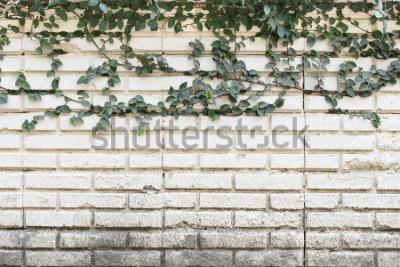 Fototapeta Zelená louka rostlin na staré cihlové zdi