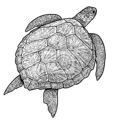 Image result for želva obrázek kresba