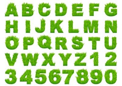 Fototapeta Zelená tráva abecedy s písmeny a čísly