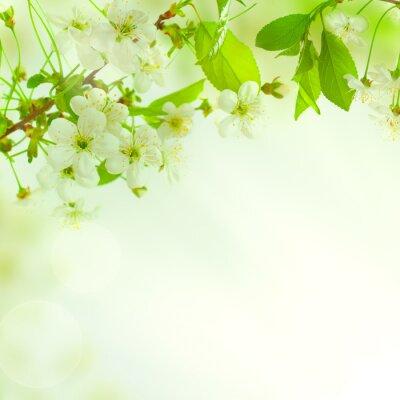 Fototapeta Zelené listy, krásná příroda na pozadí