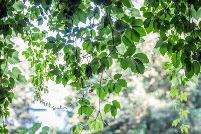 Fototapeta zelené listy na pozadí