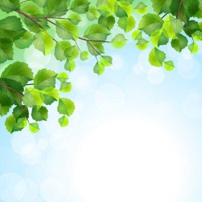 Fototapeta Zelené listy větve vektorové pozadí