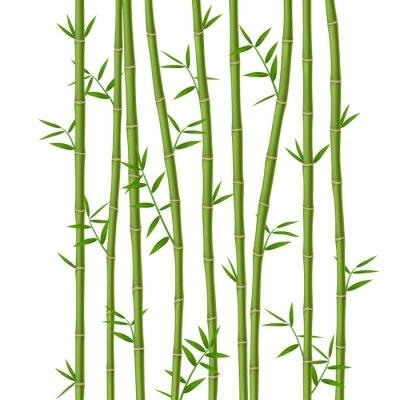 Fototapeta Zelený bambus s listy izolovaných na bílém pozadí