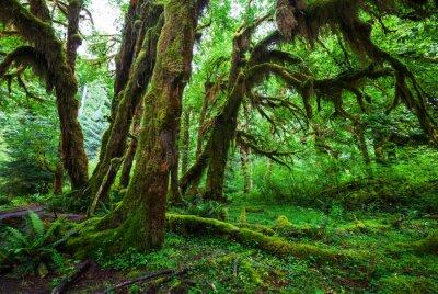 Fototapeta Zelený les