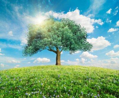 Fototapeta Zelený strom jarní krajina
