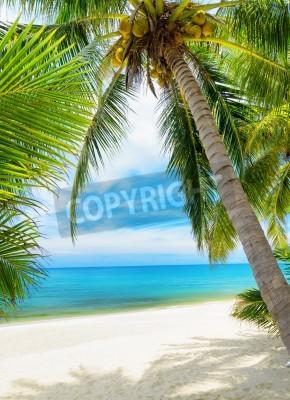 Fototapeta Zelený strom na pláži s bílým pískem
