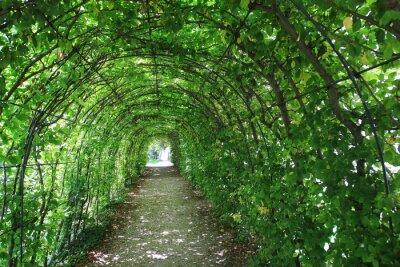 Fototapeta Zelený tunel v zahradě