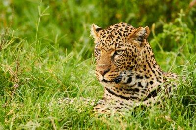 Fototapeta Žena leopard portrét