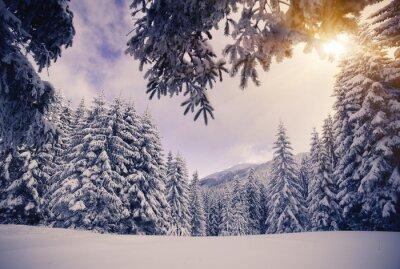 Fototapeta zimní