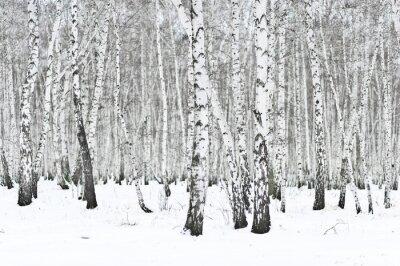 Fototapeta zimní les