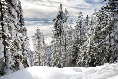 Fototapeta Zimní les v Alpách u Kufsteinu v Rakousku, v Evropě.