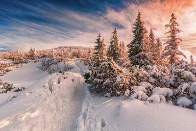 Fototapeta Zimní slunce na Beskyd