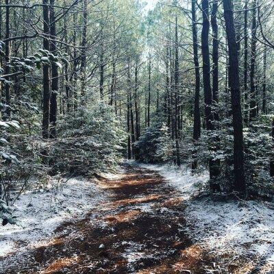 Fototapeta Zimní Woods