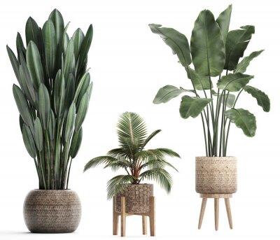 Nálepka 3d illustration of tropical plants banana