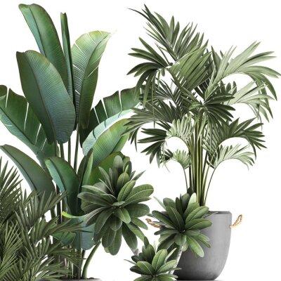 Nálepka 3d illustration of tropical plants on white background