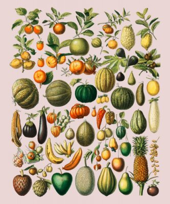 Nálepka A vintage illustration of a wide variety of fruits and vegetables from the book, Nouveau Larousse Illustre (1898), by Larousse, Pierre, Augé and Claude, Digitally enhanced by rawpixel.