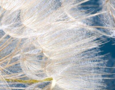 Nálepka Abflug / Flugschirme der Pustblume beim Začátek :)