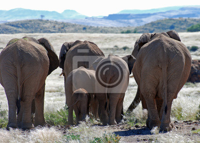 Nálepka Afričtí sloni procházky Damaralandu