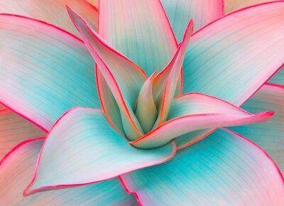 Nálepka agáve listy v módní pastelové barvy pro design pozadí