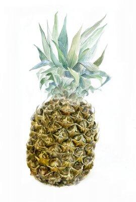 Nálepka Akvarel ananas na bílém