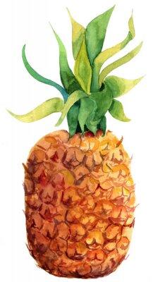 Nálepka Akvarel ananas na bílém pozadí