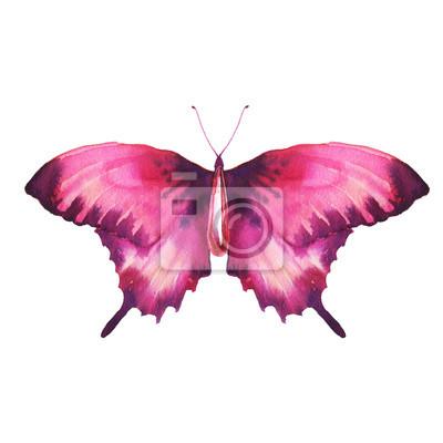 Akvarel červené motýl s rubínem. Ručně malovaná šperky zvíře izolováno na bílém pozadí. Módní tištěné